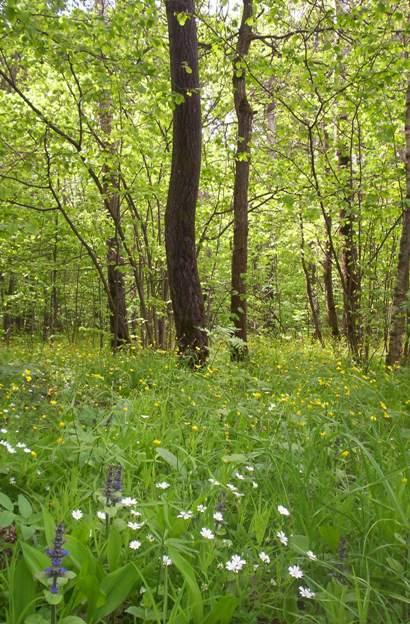 Май в лесу за калиткой сада