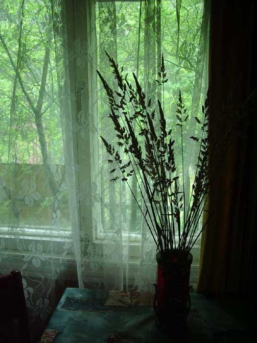 Сад за окном