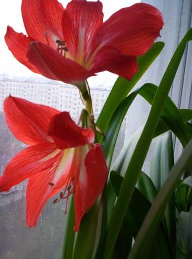... и второй цветок