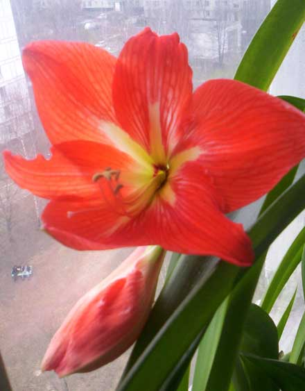 Один цветок...