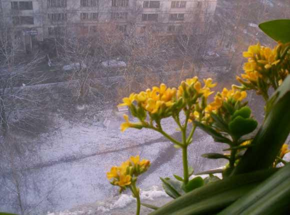 То снег, то солнце ...